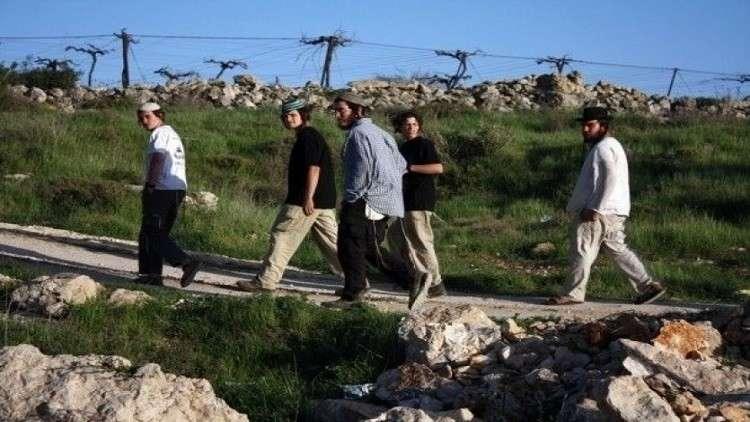 مستوطنون يسرقون ثمار مئات أشجار الزيتون شرق نابلس
