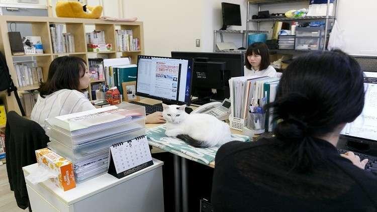 علماء: الجلوس لفترات طويلة لا يسبب السمنة!