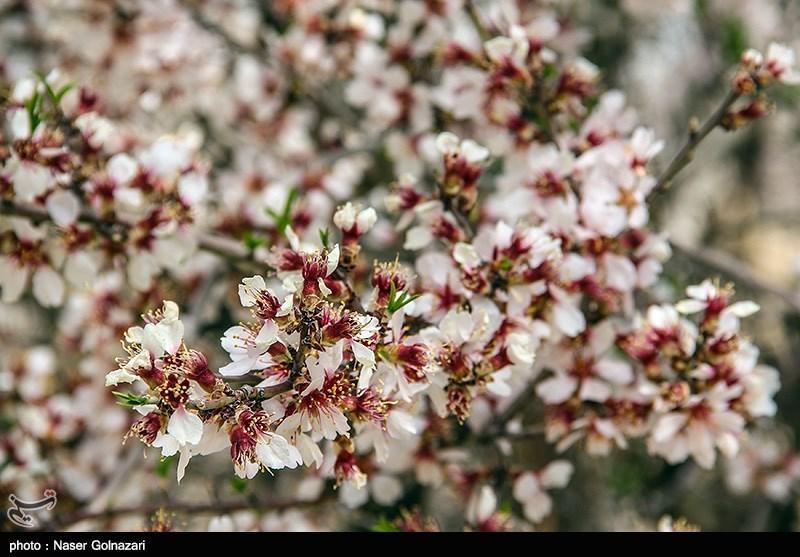 طبيعة مدينة ايلام الربيعية