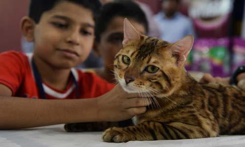 بالصور.. مشاركة ملكات جمال القطط فى المعرض الدولى بالهند