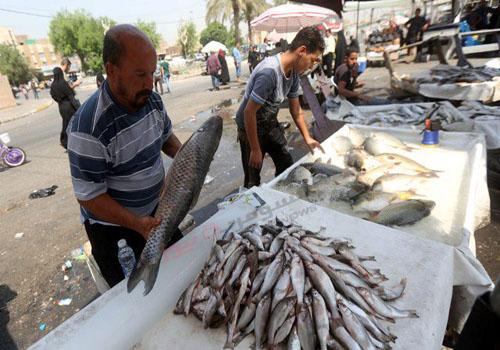 أسماك تُمسك باليد على شاطئ دجلة وسط بغداد+بالصور