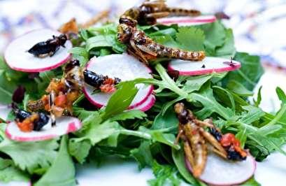 الغارديان: هل سنضطر لأكل الحشرات لإنقاذ كوكبنا؟