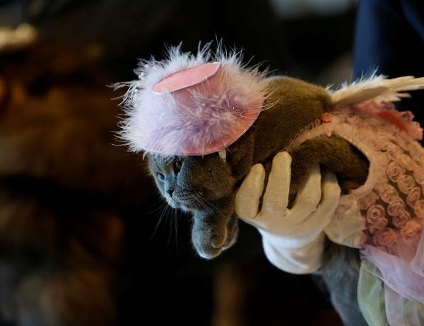 صور.. مالطا تستضيف مهرجان القطط العالمى