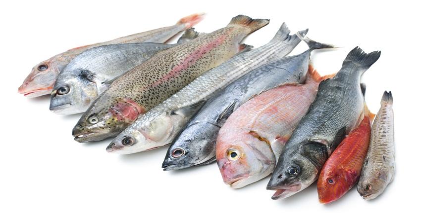 دراسة صينية جديدة عن مزايا الأسماك الغنية بـ