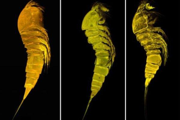 اكتشاف ثلاثة انواع جديدة من الكائنات الحية في الخليج الفارسي وبحر عمان