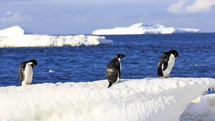 اكتشاف علامات اقتراب كارثة في القارة القطبية الجنوبية