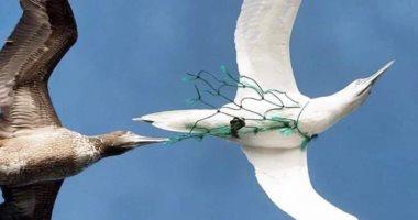 بلدية دبى تحتفل باليوم العالمى للطيور المهاجرة غداً