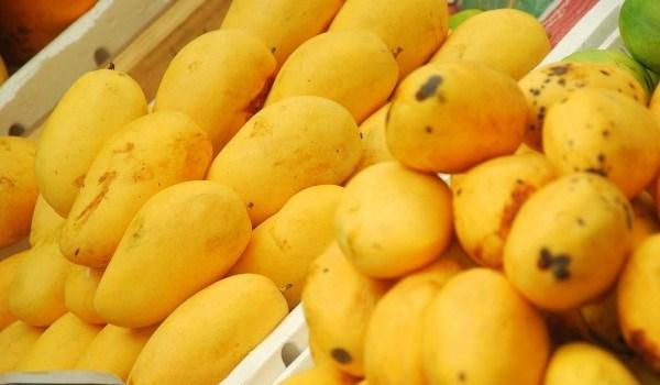 محافظة ايرانية تنتج 16 الف طن مانجو