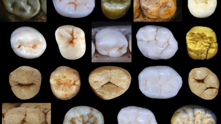 دحض النظرية الشائعة لتطور الإنسان