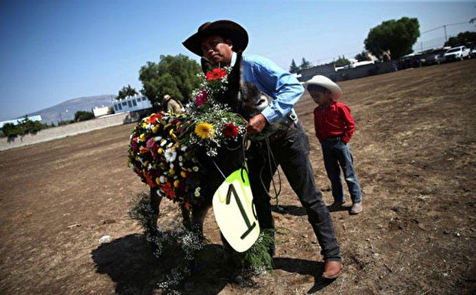 """صور.. المكسيكيون يحتفلون بـ""""يوم الحمار"""""""