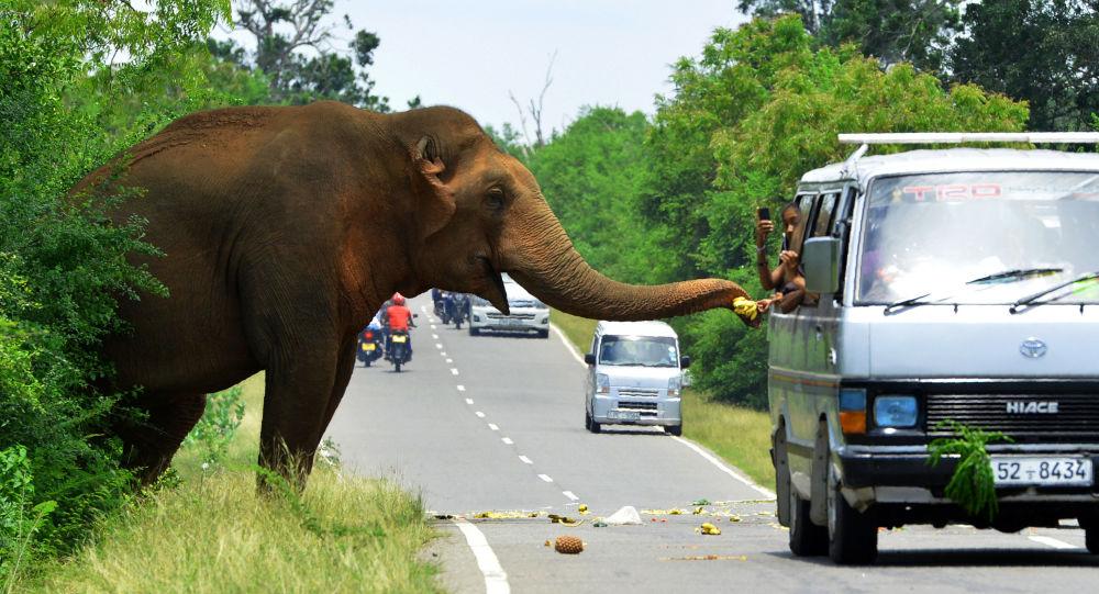 التفجيرات الإرهابية تسقط السياحة السريلانكية إلى الحضيض