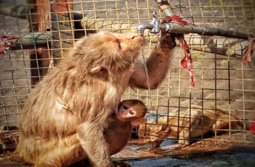 الهند.. الحر يقتل القرود والعواصف تقتل البشر