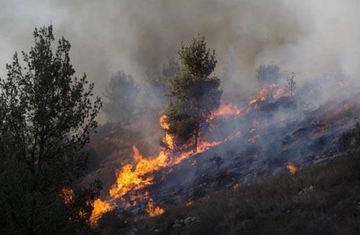 19 مليار ليرة خسائر الحرائق في شمال سوريا