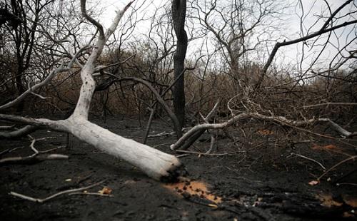 صور.. أثار كارثية بسبب حرائق الغابات فى بوليفيا وتفحم عشرات الحيوانات
