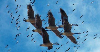 برامج دولية لاستغلال الحيوانات والطيور فى التجسس ..CIA نموذجا