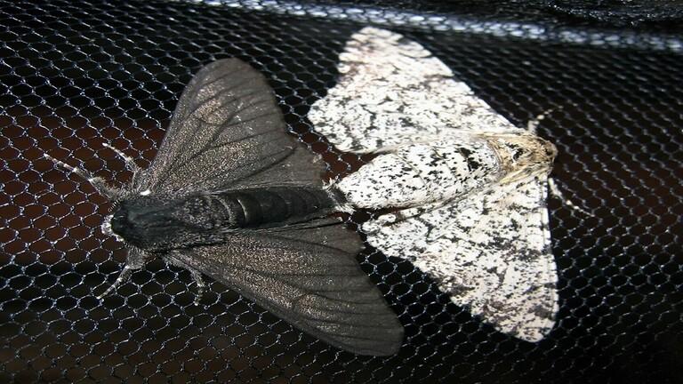 إنزيم موجود لدى حشرة العث قد يخلص الأرض من كارثة بيئية