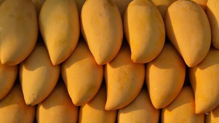 هل يمكن أن يقلل تناول المانغو من تجاعيد الوجه لدى النساء؟