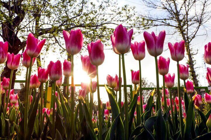 إيران تحتل المرتبة 17 في إنتاج الزهور والنباتات في العالم