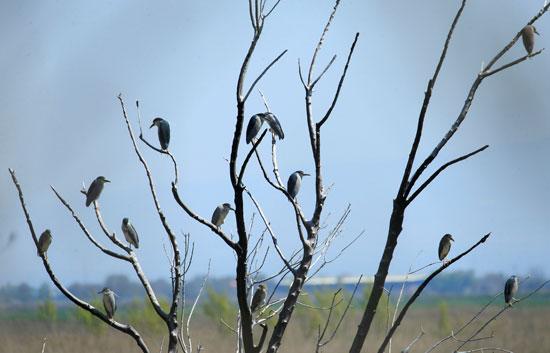 الطيور المهاجرة تنتهز غياب البشر بسبب كورونا وتأخذ استراحة على أراضى لبنان