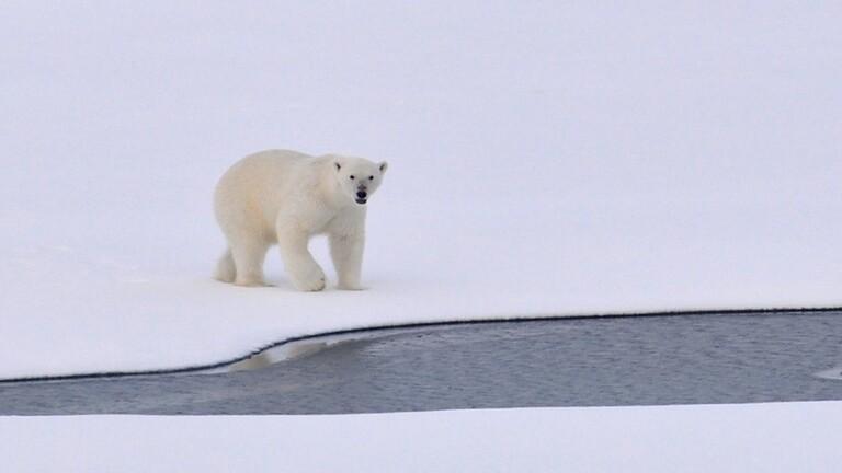 دراسة مفاجئة تتوقع خلو المحيط الشمالي من الجليد في الصيف قبل عام 2050!