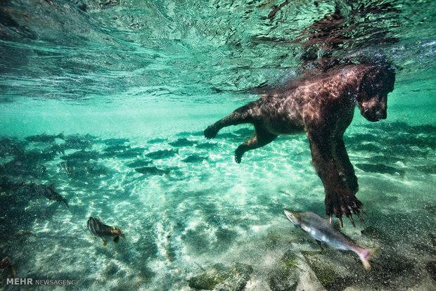 Animal unforgettable behaviors