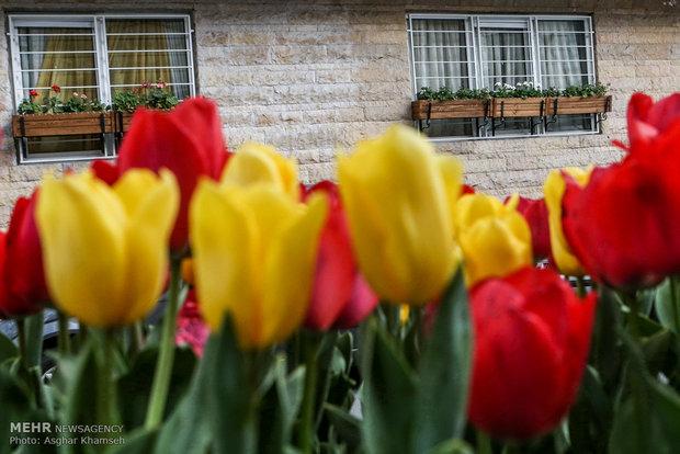 Iranian Art Museum Garden