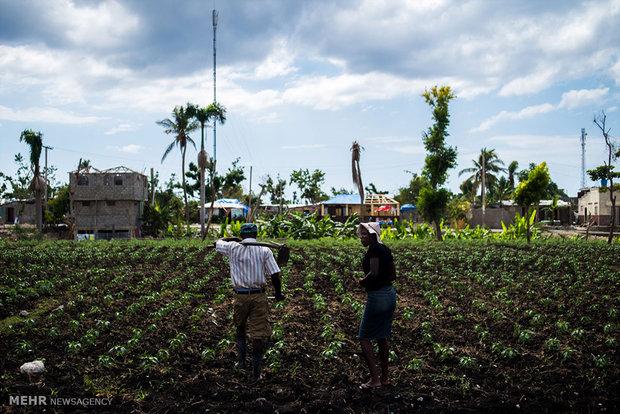Repairing damages caused by Mathew Hurricane in Haiti
