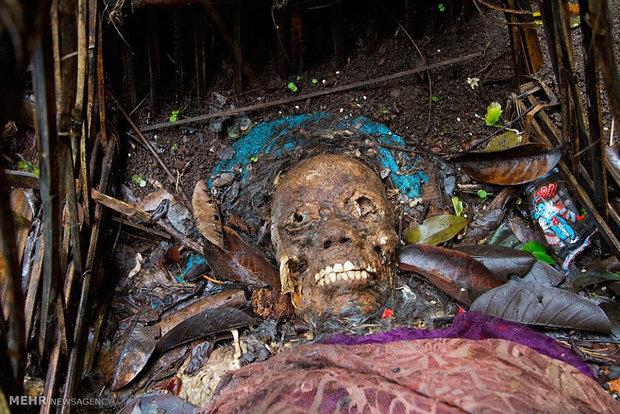 Jungle of the dead