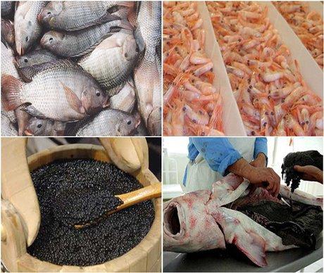 Iran exports over 100 thousand tons fisheries