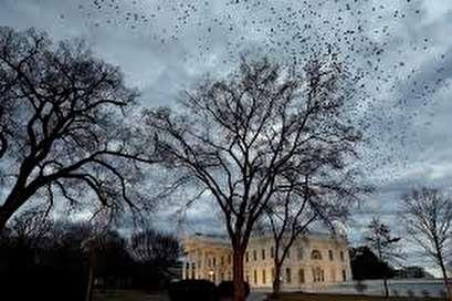 U.S. government workers awake to shutdown, Senate vote looms