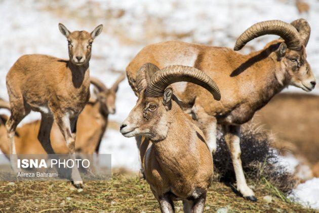 Animal-lovers feed quadrupeds near Tehran heights