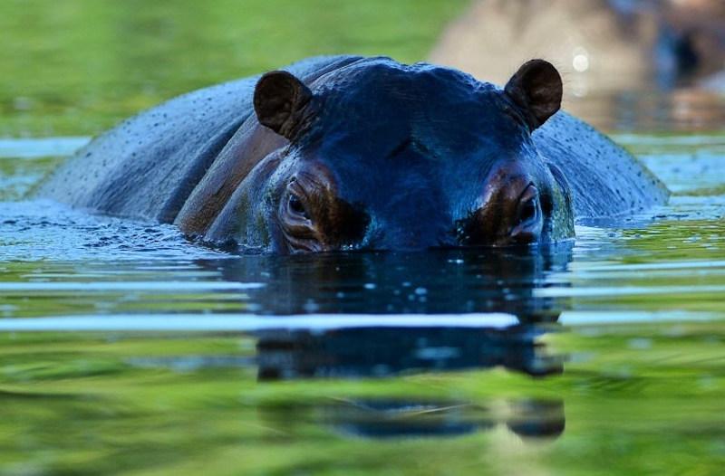 Hippo kills Taiwan tourist visiting Kenyan lake
