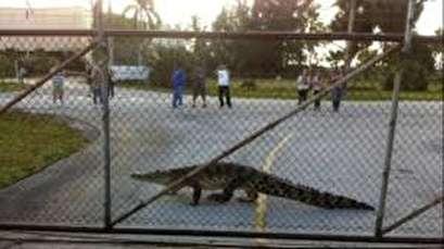 Crocodile relocated from railway bridge
