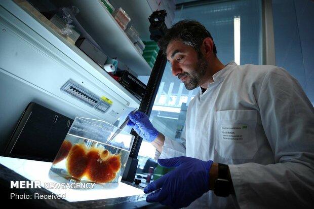 German scientists create see-through human organs