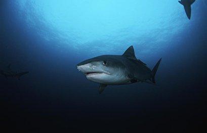 Cape Cod's gray seals attract sharks, causing summer beach closures