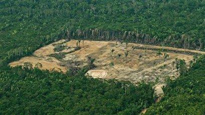 Sacked official admits severe deforestation under Bolsonaro