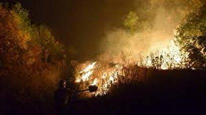 Nine killed, 10 hospitalized in forest fires in eastern Ukraine