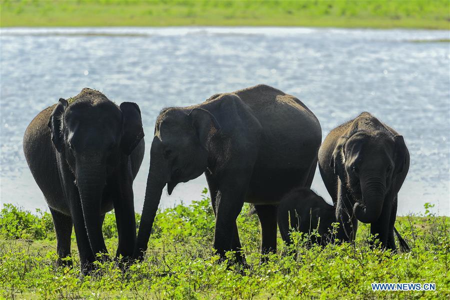 Animals in Yala National Park