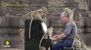 Pianist plays concert for hundreds of Thai monkeys in historic site
