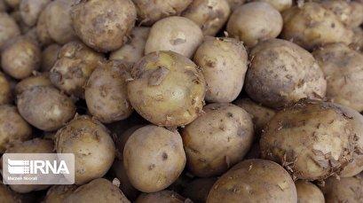 Iran allows zero-tariff exports for potato amid rising oversupply