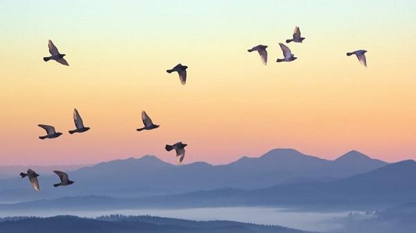 Unprecedented: Mysterious, Sudden Mass Die-Off birds in the US