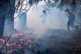 Forest fires in Argentina leave 7 injured, 15 missing
