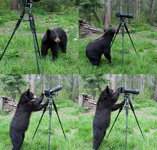 آموزش عکاسی به خرس در چهار دقیقه! +عکس