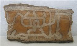 """کلمه """"الله"""" و """" محمد"""" بر بدنه درخت کهنسال در بیجار/ تصاویر"""