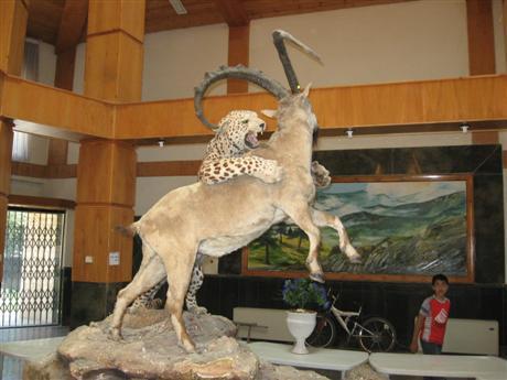 827255 407 - ساخت موزه حیات وحش در مشگینشهر