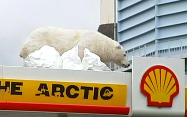 جفتري خرس قطبي عكس هاي جالب و ديدني از دنياي خرس هاي قطبي