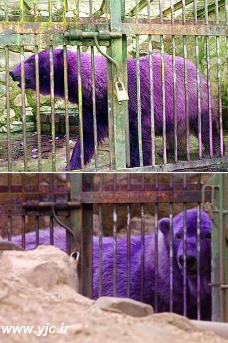 5 چهره عجیب میان حیوانات +عکس