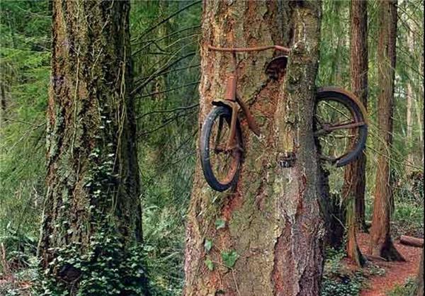نتیجه تصویری برای تصاویر درخت و جنگل