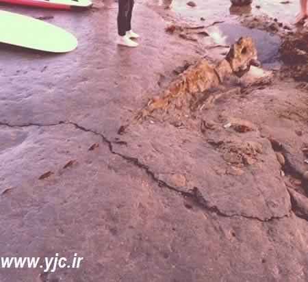 فسیل عکس های فسیل های قدیمی عکس عجیب ترین فسیل های کشف شده عجیب ترین فسیل های کشف شده