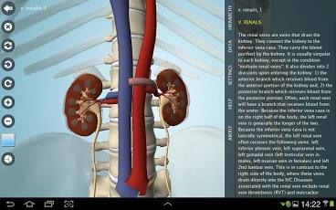 آناتومی بدن انسان را به صورت سه بعدی مشاهده کنید+دانلود 1019856_261